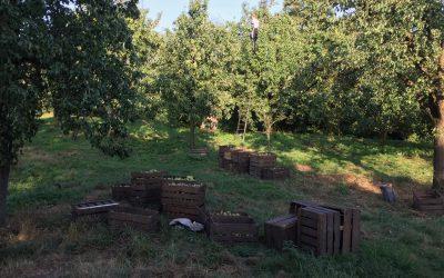 Laat duizend hoogstam fruitbomen groeien