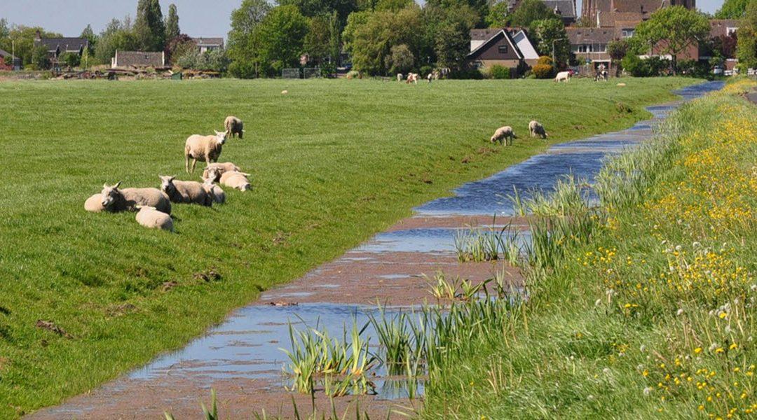 Collectieven krijgen centrale rol bij agrarisch natuurbeheer